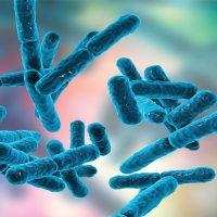 پروبیوتیک چیست و چه خواصی دارد؟
