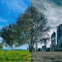 بروز بیماری های جدید با انهدام زیستگاه های طبیعی و حیات وحش