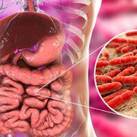 اهمیت میکروب های همزیست در سلامتی انسان، فلور میکروبی چیست ؟